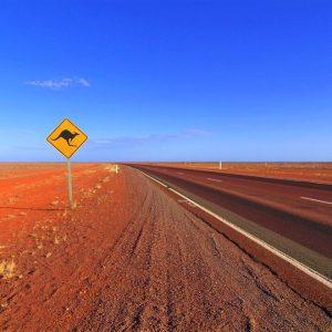 Panneau kangourou sur route highway